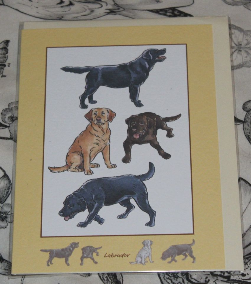 LABRADOR GREETINGS CARD with pictures of the breed